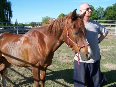Picture of chestnut Arabian mare, Kootenai.
