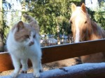 Mistle Toe walks the snowy fence in front of Sunny.