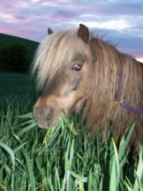 Picture of our rescued miniature horse.