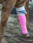 Picture of a horse's bandaged leg.