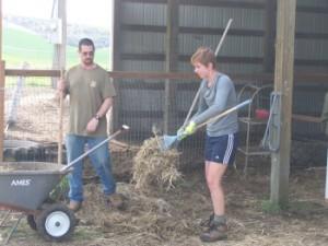 Volunteers working in the barn.