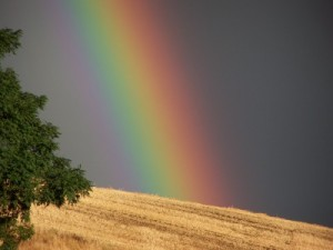 A rainbow, the sign of promise.
