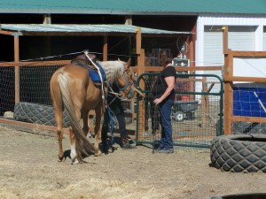 Picture of session leader teaching youth to safely take a horse through a gate.