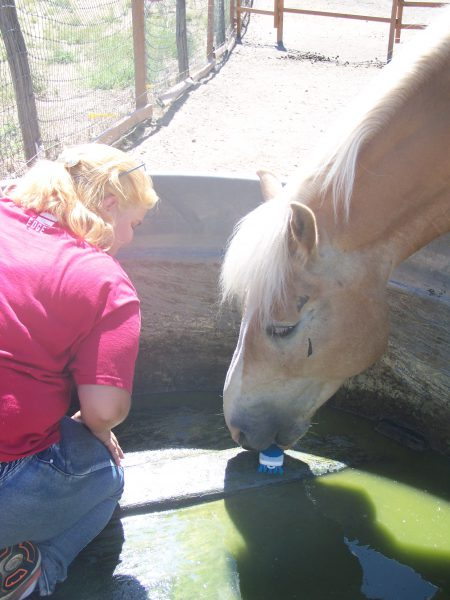 """Picture of a horse taking a scrub brush in his mouth and """"scrubbing"""" the bottom of his water trough."""